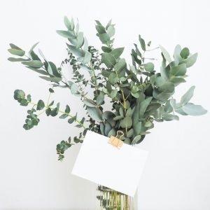 Bunch eucalyptus